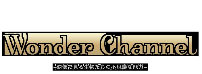 Wonder Channel